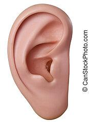 wzór, ucho, ludzki