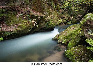 wzdłuż, spływa, soczysty, las, fałdzisty