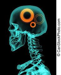 x 線, の, 頭骨, ∥で∥, gears.