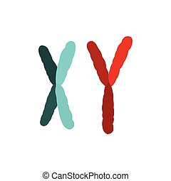 X and Y chromosome icon