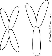 X and Y chromosome icon, outline style
