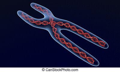 x, chromosome, render, 3d