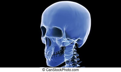 x, crâne, boucle, rayon