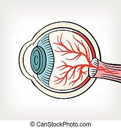 x, globo ocular, rayo