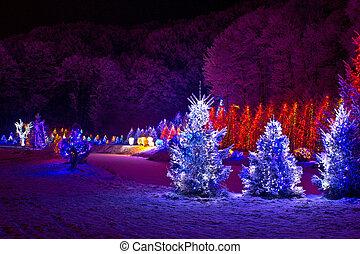 x-mas, fantasie, -, dennenboom, lichten, bomen, kerstmis