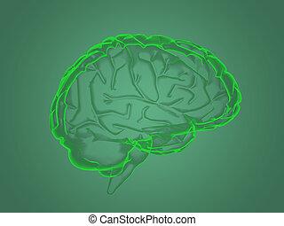 X-ray brain anatomy