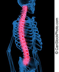 3d X-Ray illustration of Human ache spine in red