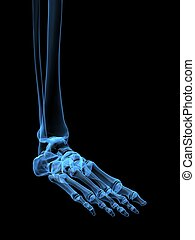 x-ray foot - 3d rendered x-ray illustration of a human ...