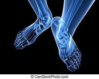 x-ray foot illustration