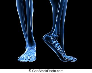 3d rendered x-ray illustration of transparent human foots