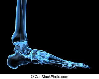 x-ray foot - 3d rendered x-ray illustration of a human...