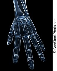 x-ray hand - 3d rendered x-ray illustration of a human...