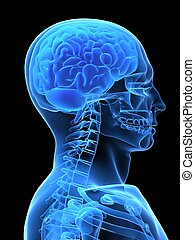 x-ray head - 3d rendered x-ray illustration of a human head ...