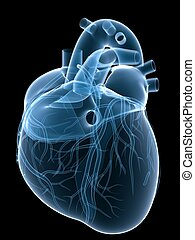 x-ray heart - 3d rendered x-ray illustration of a human ...