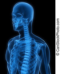 x-ray human skeleton