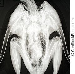 X-ray image of a bird.