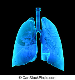 X-Ray of human Lungs
