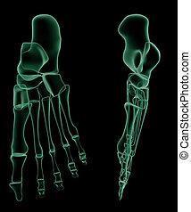 X-ray of the human foot