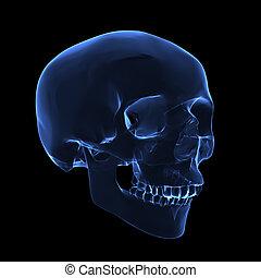 X-ray skull - Isolated human x ray skull on black background...