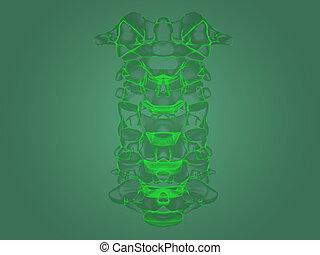 X-ray spine anatomy