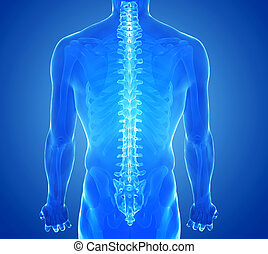 X-ray view of Human Spine - 3d rendered illustration - axis...