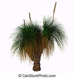Xanthorrhoea australis Tree - Xanthorrhoea australis, the...
