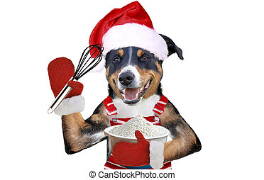 xmas dog in Santa dress holding a wire whisk