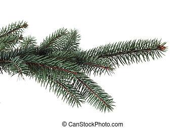 Christmas pine tree isolated on white background