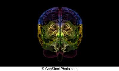 xray, cerveau, parties, 17