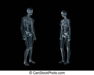 Xray, x-ray of the human body, man and woman. - Anatomically...