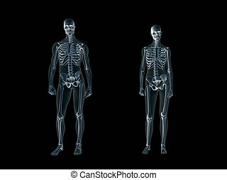 Xray, x-ray of the human body man and woman. - Anatomically...