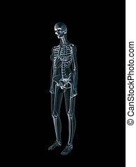 Xray, x-ray of the human female body. - Anatomically correct...