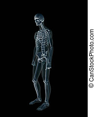 Xray, x-ray of the human male body. - Anatomically correct...