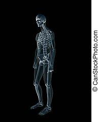 Xray, x-ray of the human male body. - Anatomically correct...