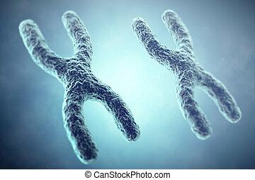 XX Chromosome concept. Female Heterogametic Sex. 3d illustration.