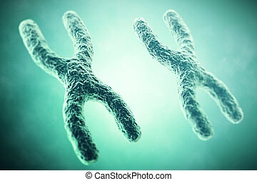 Xx Kromosomi