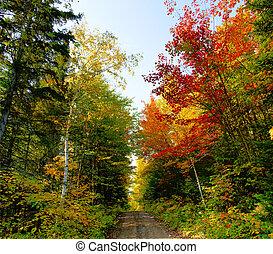 xxl, outono, floresta, paisagem