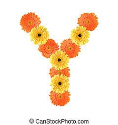 y, alfabeto, flor, criado