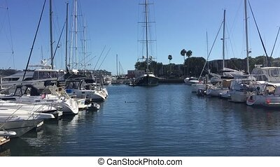 Yacht Basin with boats berthed, sea lion swimming