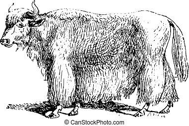 Yak, vintage engraving. - Yak, vintage engraved illustration...