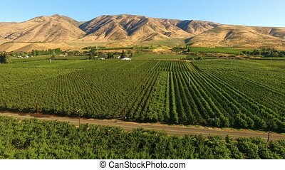 Yakima Valley Cherry Orchard Farm Agriculture - Aerial view...