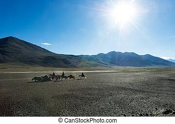 yaks., nomads, ladakh, het reizen, hoogland, tibetan, hourses