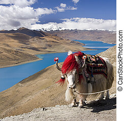 yamdrok, meseta, tibet, tibetano, lago, -