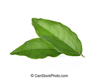 Yanang leaf isolated on white background
