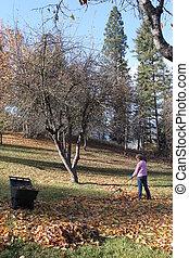 Yard Full of Leaves