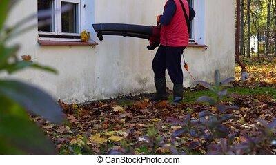 yard, souffler, fenêtre, terrestre, feuilles, ouvrier, mâle...