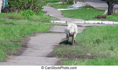 Yard, stray dogs running down the street.