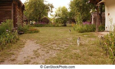 yard., village, chats