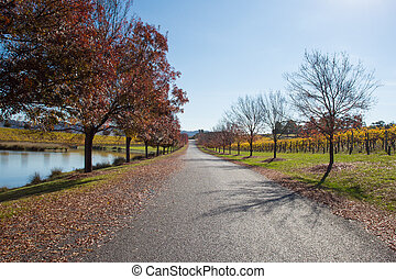 Yarra Valley Winery in Autumn