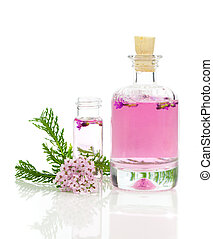 Yarrow herbal tincture, with fresh flowers Achillea ...